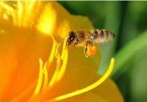 花粉的功效与作用及食用方法,了解下