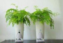 铁线蕨的养殖方法,注意了解下
