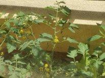 阳台养花作用
